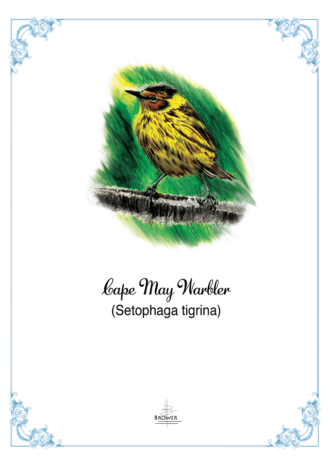 CAPE MAY WARBLER flat-1
